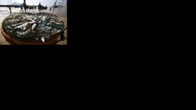 Visser leverde ton explosieven voor maffia