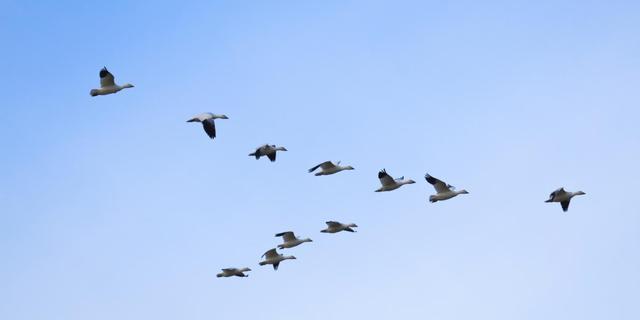 'Eerste vogels hadden vier vleugels'