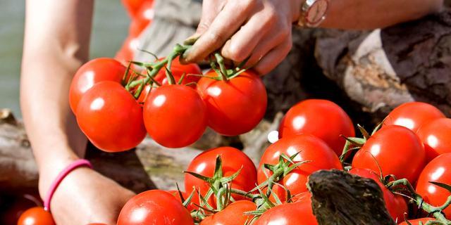 'Tomaten verbeteren kwaliteit sperma'