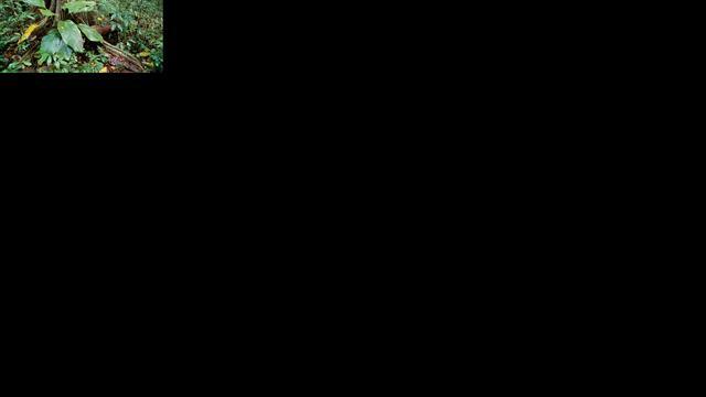 'Zaden tropische bomen krimpen door ontbossing'