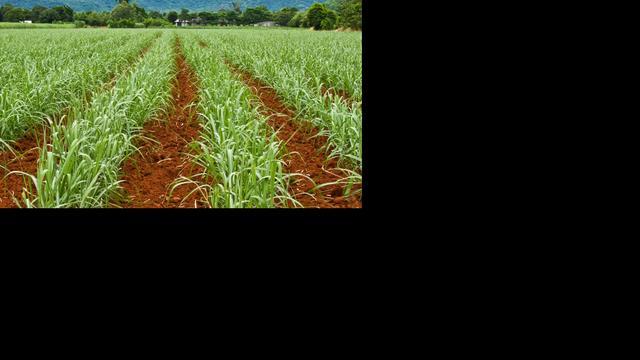 Wetenschappers maken planten weerbaar tegen droogte