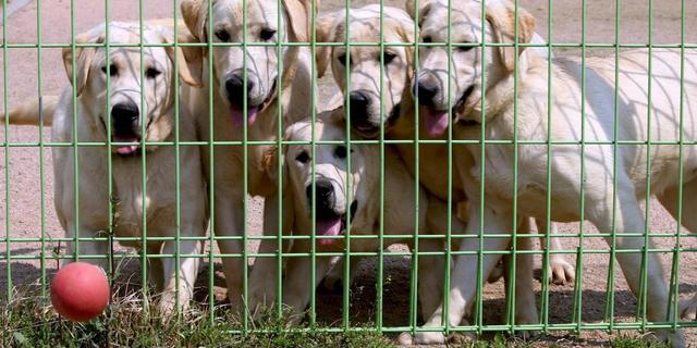 Dierenbescherming onderzoekt dumpgedrag