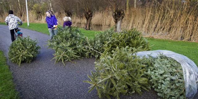 Gronings initiatief geeft kerstbomen-met-kluit tweede leven