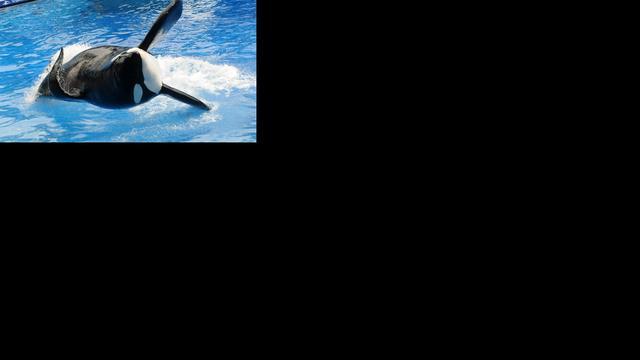 Beursgang SeaWorld moet 540 miljoen opleveren