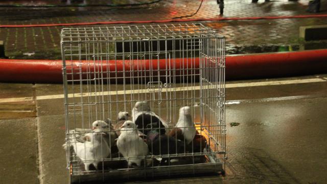 Brand in duivenwinkel Scheveningen