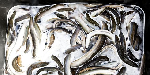 Vrouw ziet gestolen viskar voorbij rijden