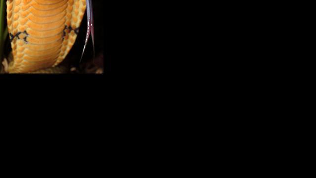 Man zwaargewond door beet eigen cobra