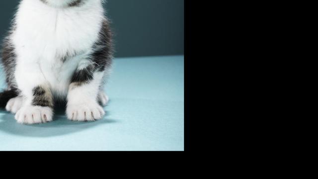 Kat met twee gezichten sterft op 15-jarige leeftijd