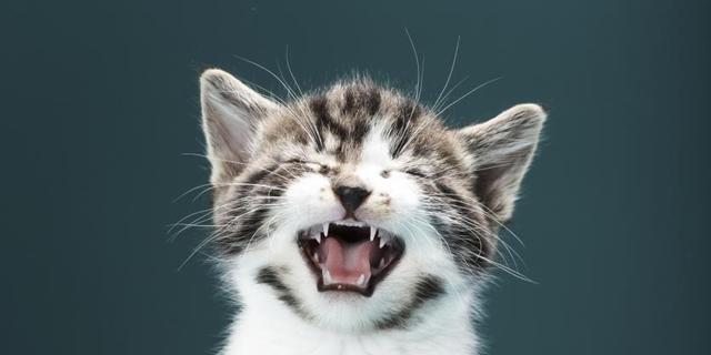 Eerste Nederlandse kattencafé opent deuren
