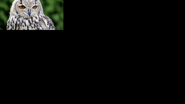 Roterende uilenkop verklaard