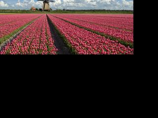 Toeristen associëren 'Holland' nog steeds met molens, kaas en fietsen