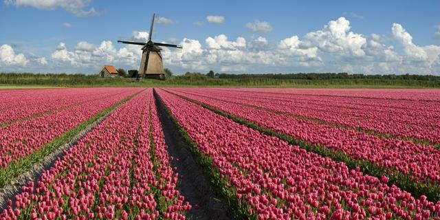 Nederland blijft land van 'tulpen en tolerantie'