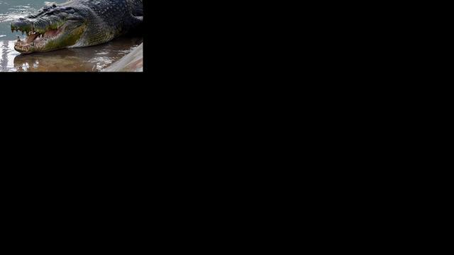 Primitieve krokodillen jaagden op baby-dino's
