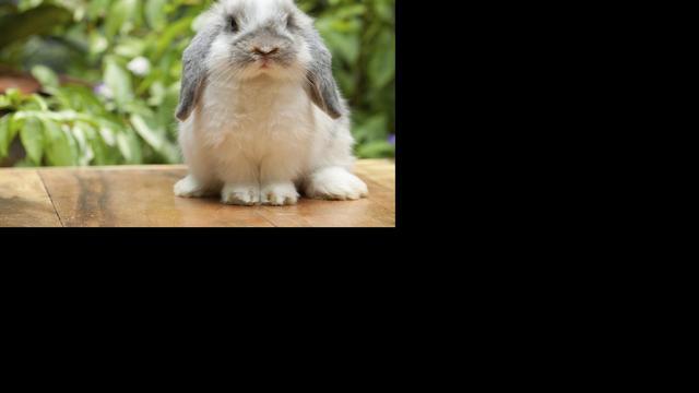 Recordaantal konijnen gedumpt in Amsterdam