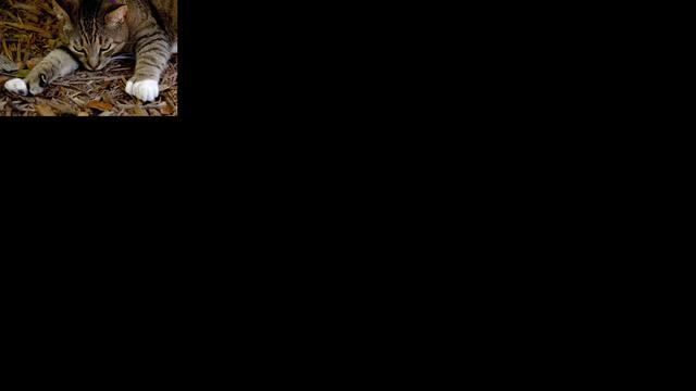 Onthoofde katten op dak restaurant in Zeeland gelegd