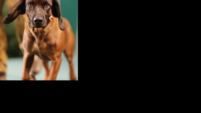 Hondenbrein reageert op emoties in menselijke stem