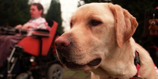 Honden bijten labrador dood in Katwijk