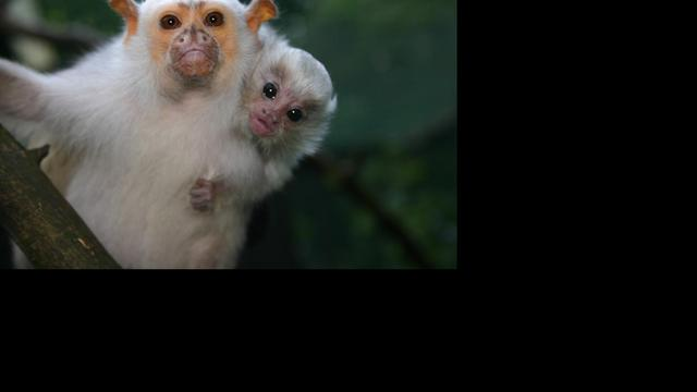 Kopers in de rij voor failliete dierenparken