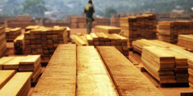 'Nederland importeert nog volop illegaal gekapt hout'