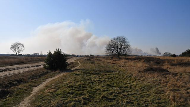 Grote heidebrand in Leenderbos