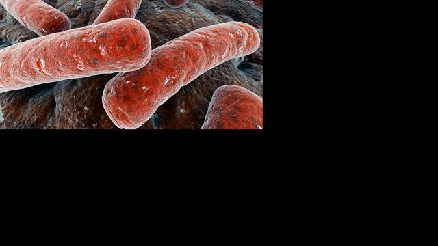 Communicatie tussen bacteriën vergroot resistentie