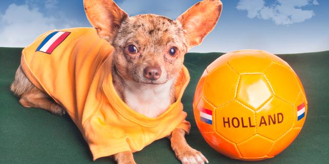 Chihuahua redt meisje van pitbull