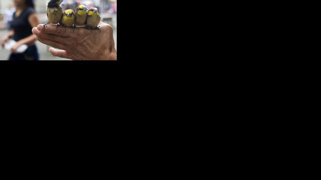 Tilburgers verdacht van illegale vogelhandel