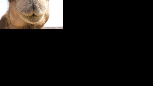 Ottomaans kamelenskelet gevonden in Oostenrijkse kelder