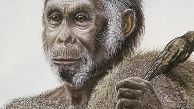 Mogelijk voorouder van 'hobbitmens' ontdekt op Flores