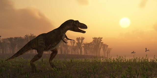 Nieuwe dinosaurus ontdekt in opslagruimte Zuid-Afrikaanse universiteit