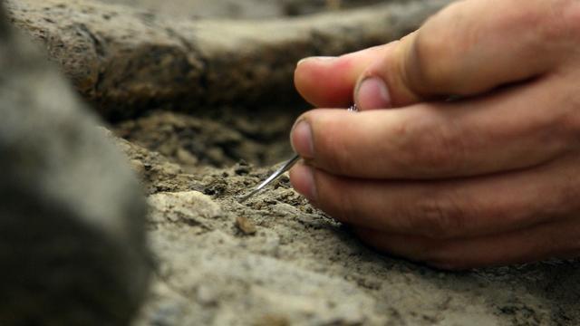 'Groepstoilet' van grote planteneters opgegraven