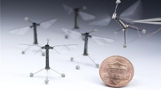 Kleinste robotinsect maakt eerste vlucht