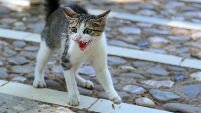 Krijsende kat redt baasje uit brandend huis