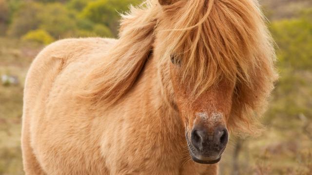 Vrouw heeft pony als huisdier
