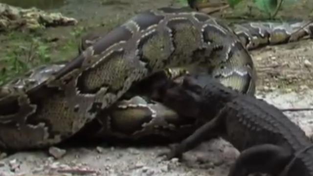 Duitse man dood gevonden met 47 slangen