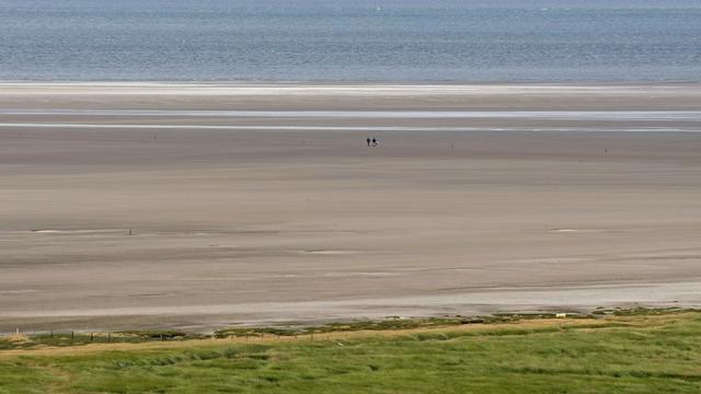 Tropische kogelvis gevonden op strand Texel