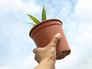 Planten groeien naar zon door vormverandering van eiwitten