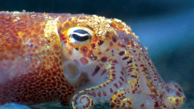Inktvishuid maakt kleurveranderende gadgets mogelijk