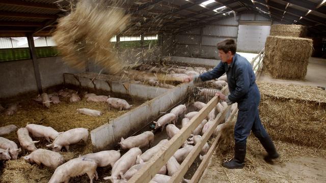 'Derde van de Brabantse varkensboeren redt het niet'