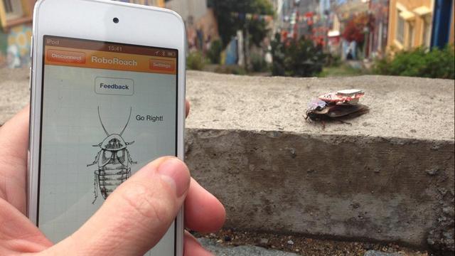 Onderzoeker bestuurt kakkerlak via smartphone
