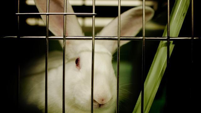 Dijksma wil fonds voor overbodig maken dierproeven