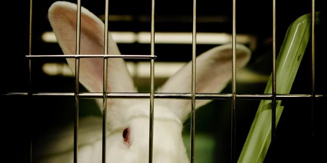 'Kweekhuid alternatief voor dierproeven'
