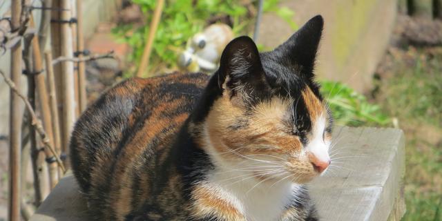 Luna populairste honden- en kattennaam