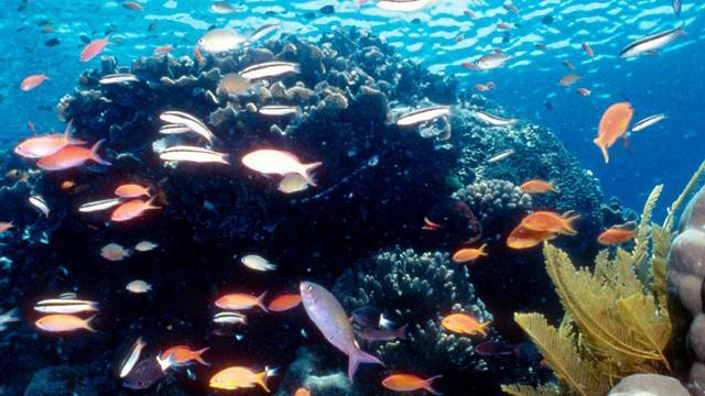 Koralen in Great Barrier Reef eten plastic