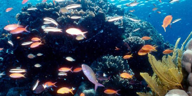 Tweederde van Great Barrier Reef beschadigd door koraalverbleking