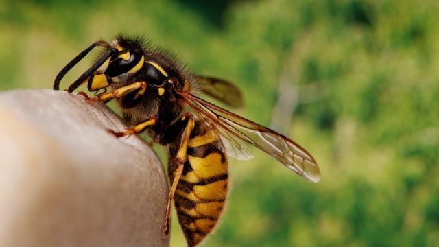 'Brug bij Kortevruchtpad afgesloten na insectenaanval'