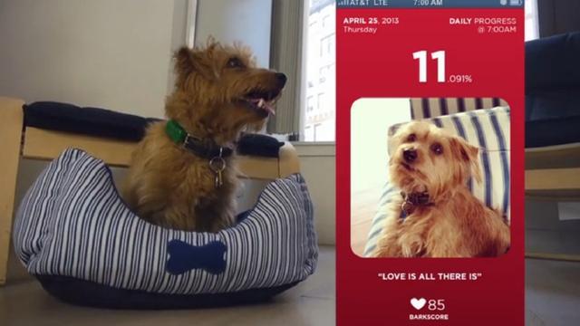 Fitbark: de stappenteller voor honden