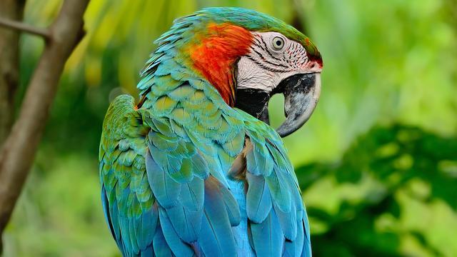 Duitse politie opgeroepen voor man die ruzie maakt met papegaai