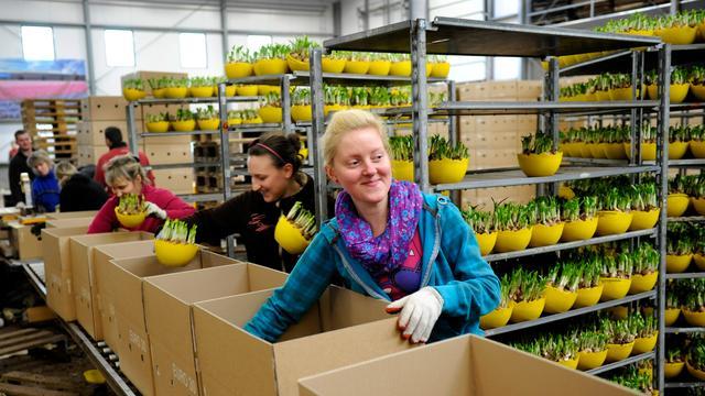Meer Bulgaren en Roemenen aan het werk in Nederland