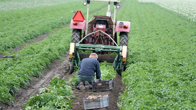 Nederlandse onderzoekers zorgen voor doorbraak in voedselzekerheid